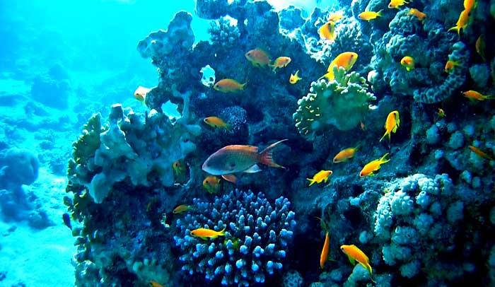 Fondo marino de Aqaba