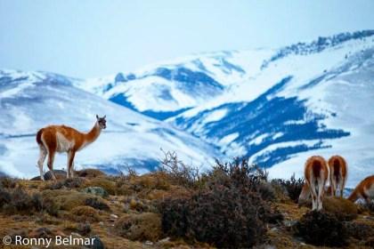 Durante el invierno, las posibilidades de avistamiento de animales aumentan proporcionalmente en relación a la disminución de los turistas