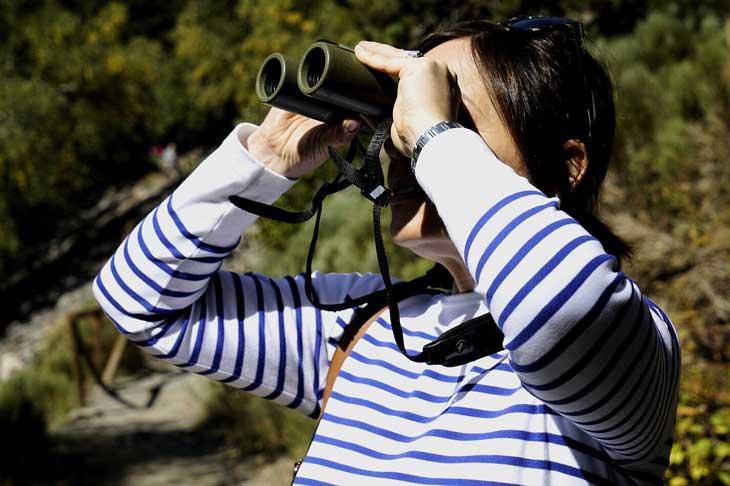 Avistamiento de aves en el Parc Nacional de Aigüestortes y Estany de Sant Maurici