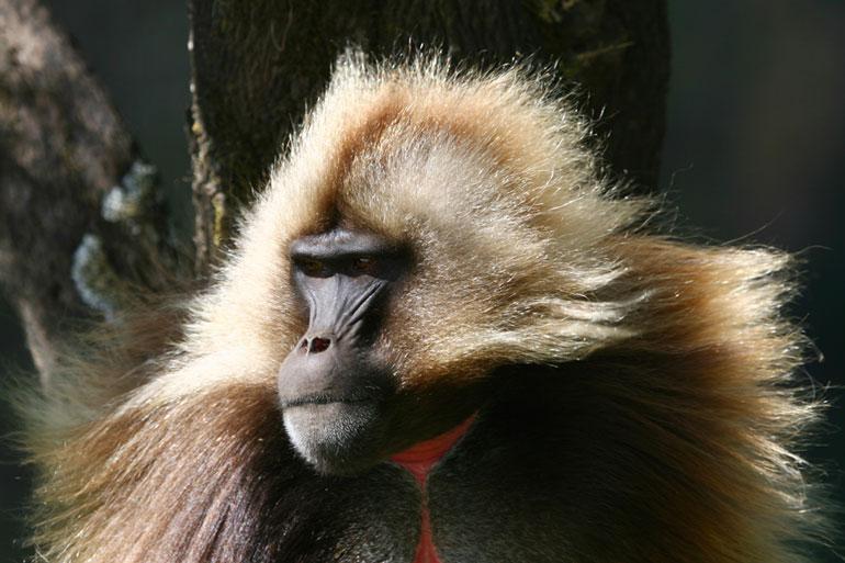 Fauna etíope