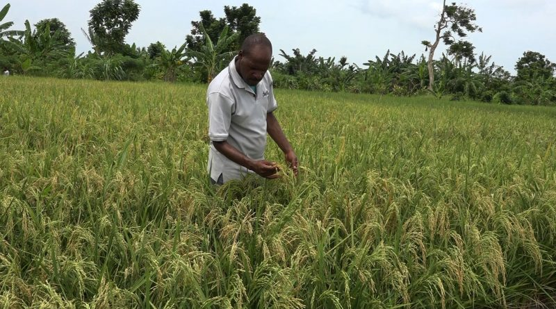 Agribusiness: Youth In Africa The Time Is Now [Entry 29]