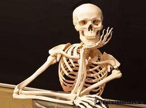Resultado de imagen para esqueletos
