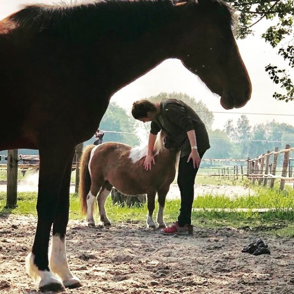 Gestalt. Soms gaat de aandacht eerst naar het kleine, voor dat het grote in beeld komt...#systemischepaardencoaching #tussenHemelenPaarden