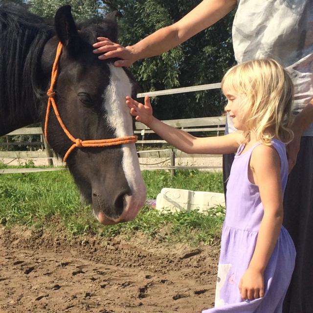 Kindercoaching met paarden, sociale vaardigheden beginnen met je plek innemen
