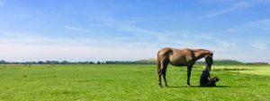 in peace of mind tussen Hemel en Paarden