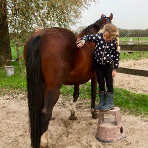 Pony Power Paddock, sociale vaardigheidstraining voor kinderen met een pony of paard als coachmaatje