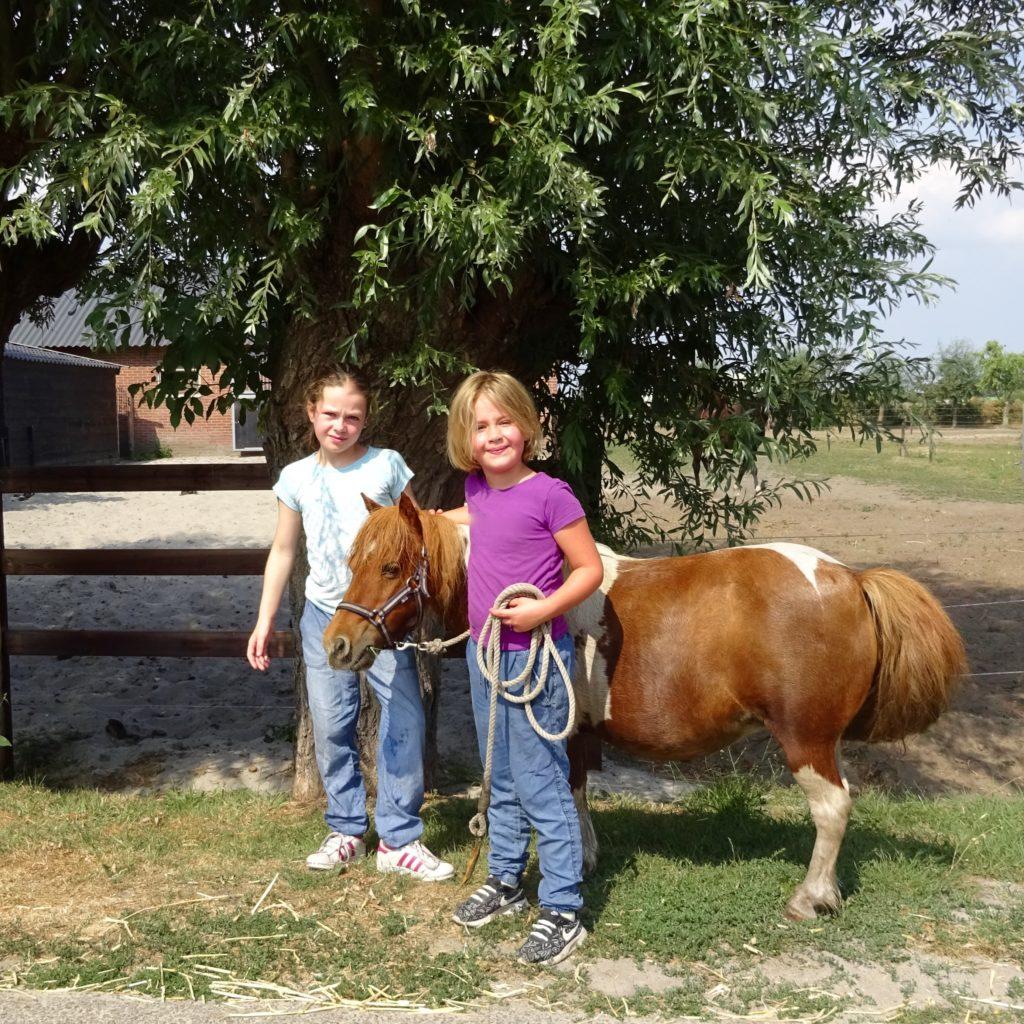 Pony Power Paddock, sociale vaardigheidstraining voor kinderen met een pony als coachmaatje