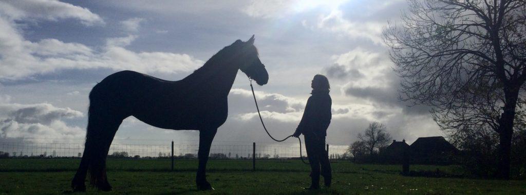 Geschiedenisch paardencoaching