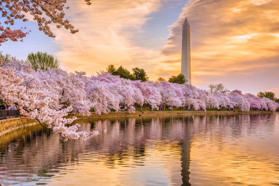 Best SPA Washington DC - Spring Cherry Blossom Special