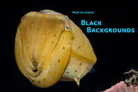 black backgrounds underwater