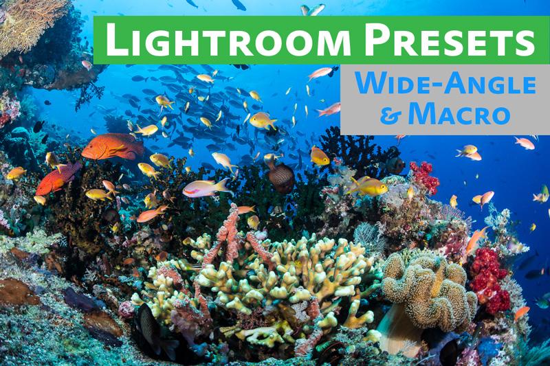 Free Lightroom Preset Pack Underwater Photography