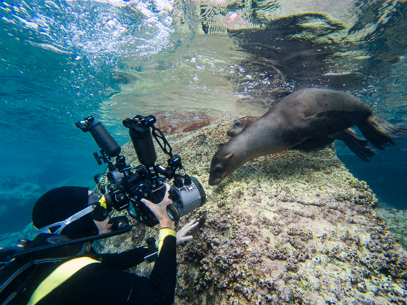 scuba diver and sea lion shot on gopro