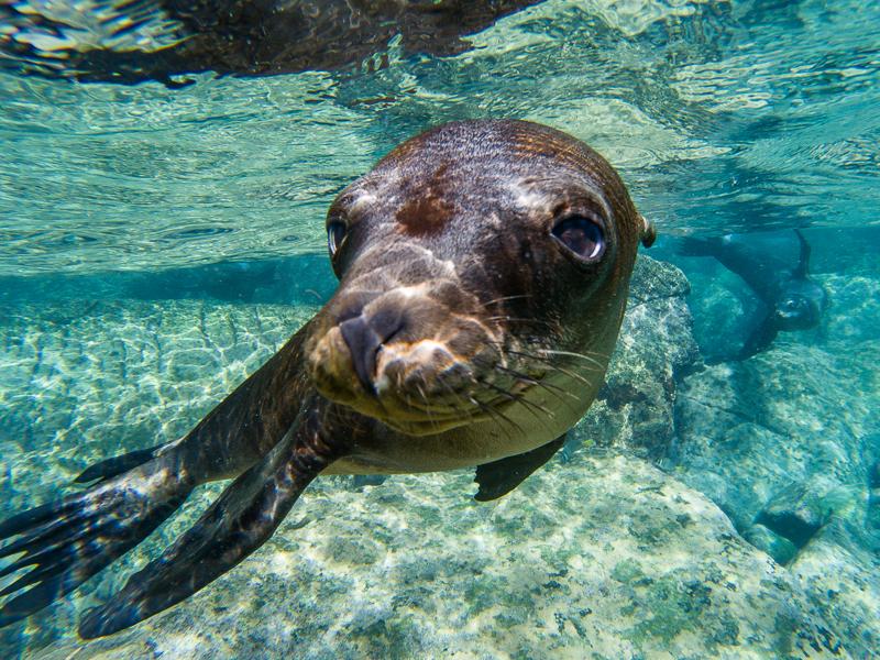 sea lion portrait with gopro