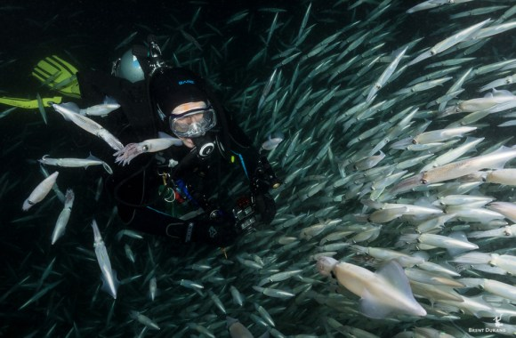 scuba-diver-and-mating-squid-aggregation