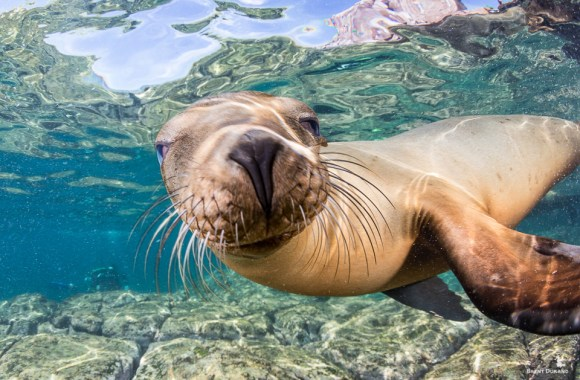 sea-lion-smiling-underwater