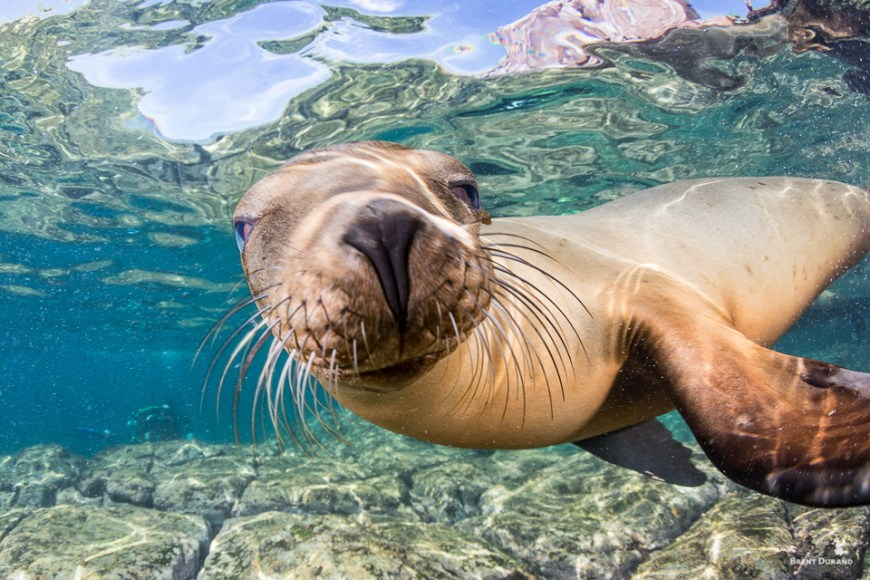 sea lion smiling underwater