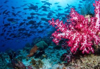 soft coral underwater in raja ampat