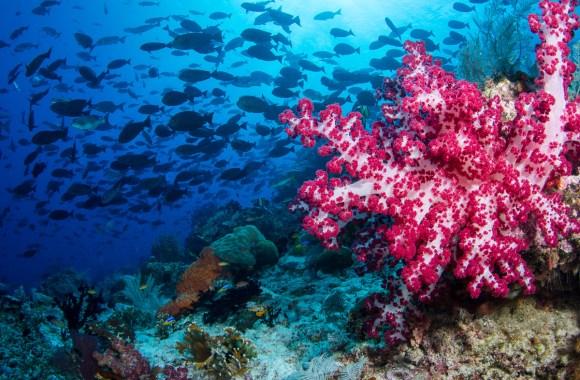 soft-coral-underwater-in-raja-ampat-indonesia