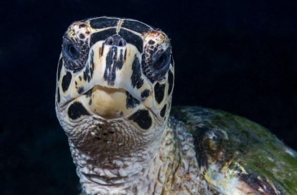 underwater portraits photo tips turtle