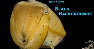 underwater black backgrounds