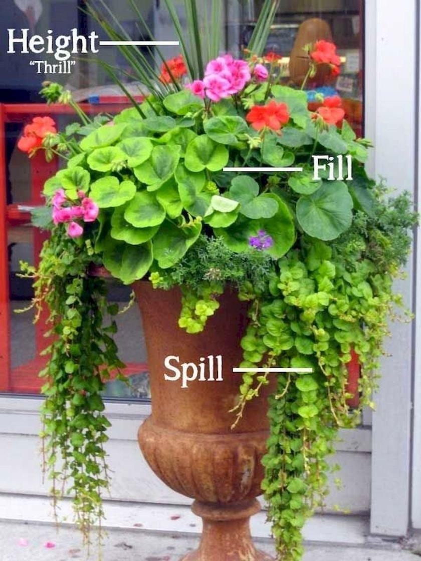 Beautiful-Container-Gardening-Flowers-110