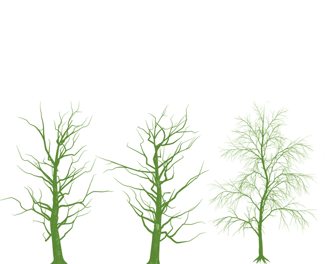 Trees without leaves on white background