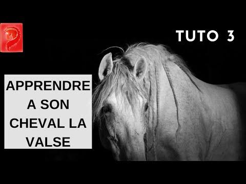 TUTO 3  –  Apprendre a son cheval la valse