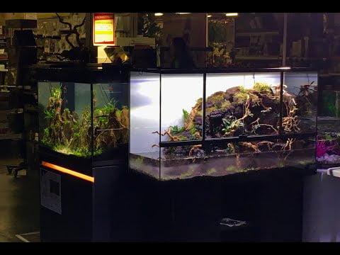 """Aquariums Eheim, Tropica et paludarium : C'est le """"carré aquascaping"""" à Truffaut Plaisir"""