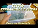 TUTO : terrarium petit prix : 5 euros ! (DIY) Pour phasmes, mantes religieuses, et autres insectes
