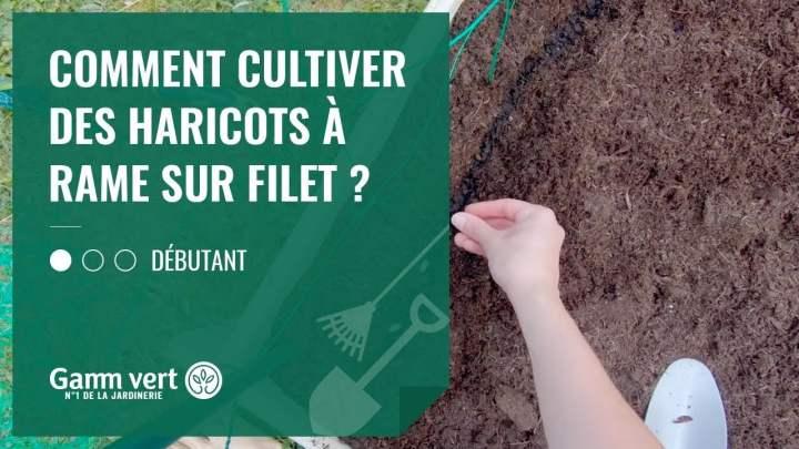[TUTO] Comment cultiver des haricots à rame sur filet ? – Jardinerie Gamm vert