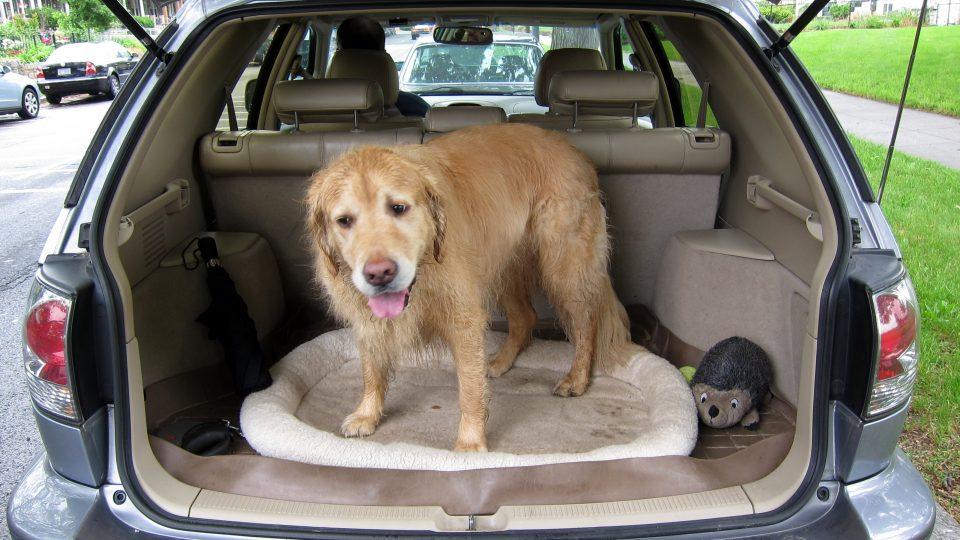 Viaggiare con il cane: ecco alcuni consigli utili