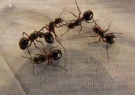 Sognare tante formiche: cosa significa