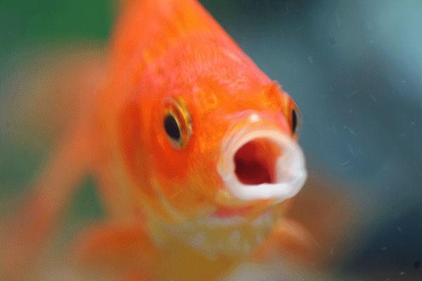 Una sera da pesce rosso back to the blog for Pesce rosso costo