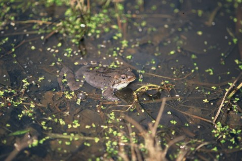 Żaba ;-)
