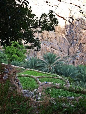 Poletka w Wadi