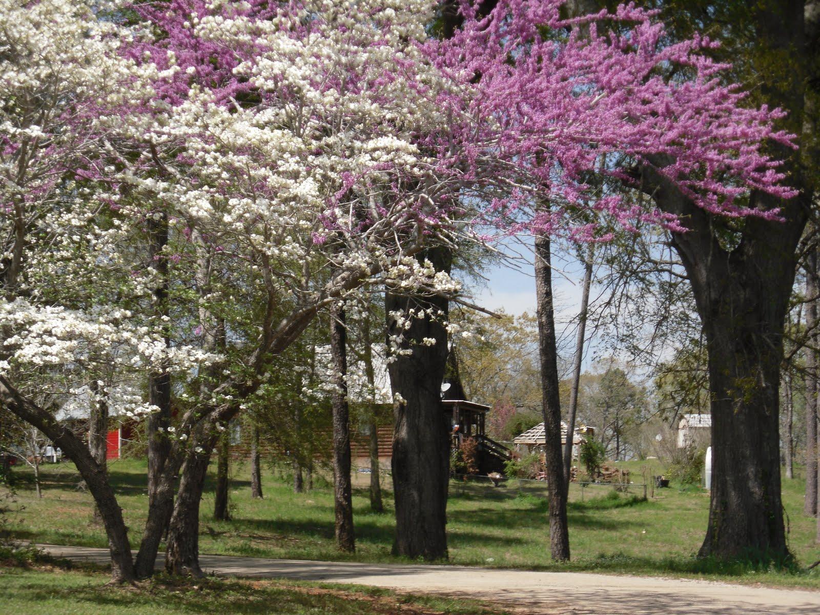 April deep east texas
