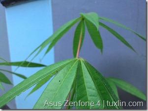 Kamera Zenfone 4 vs Lumia 520 Tuxlin Blog_15