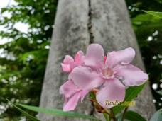 Sampel Foto Kamera Xiaomi Mi 5S