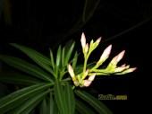 Hasil Foto KameraXiaomi Redmi 4X Malam Hari dengan LED Flash