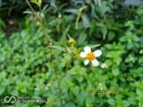 Hasil FotoKamera Asus Zenfone Zoom S ZE553KL Macro
