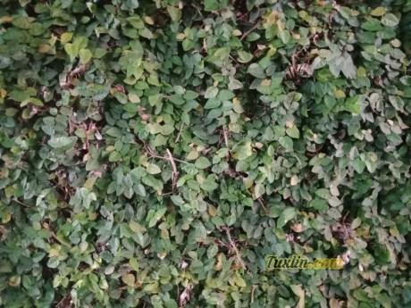 Hasil Foto Kamera Oppo F5 Siang Hari