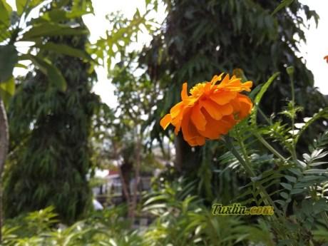 Hasil Foto KameraXiaomi Redmi Note 5A Macro