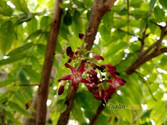 Sampel Hasil Foto KameraXiaomi Redmi 5 Plus