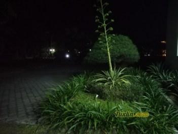 Hasil FotoKamera Asus Zenfone Max Pro M1 Malam Hari dengan LED Flash