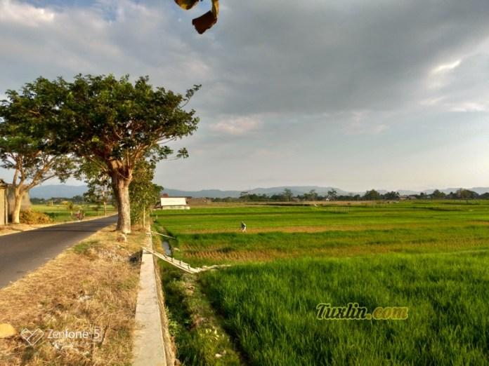 Hasil Foto KameraAsus Zenfone 5 ZE620KL Siang Hari