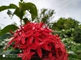 Hasil Foto KameraXiaomi Redmi Note 6 Pro Macro