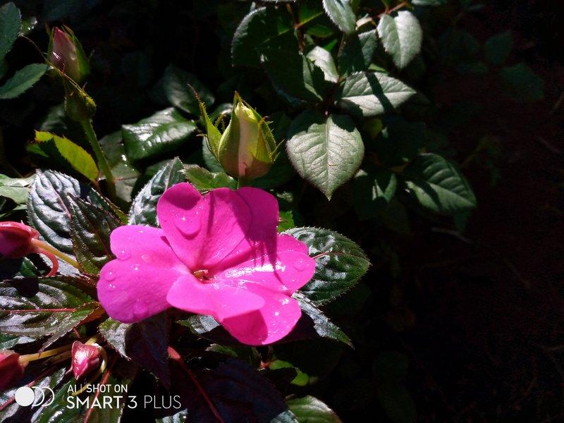 Review Kamera Infinix Smart 3 Plus: Begini Hasil Foto Triple Kamera Termurah 20