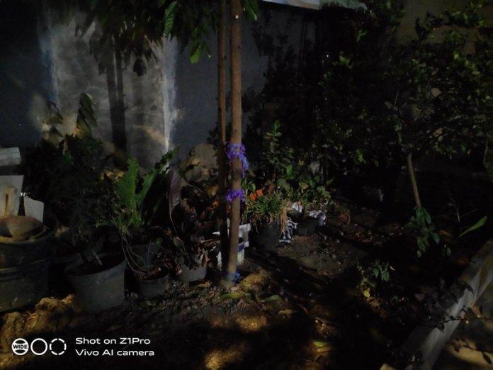 Hasil Foto Kamera Vivo Z1 Pro Night Mode