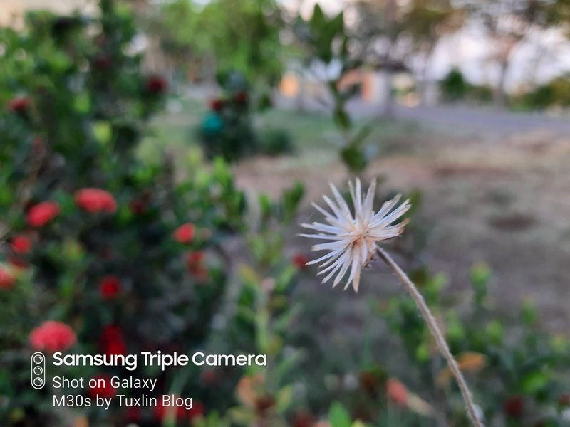 Review Kamera Samsung Galaxy M30s Berkekuatan 48MP! 23