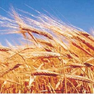 Tarım Sektörü Hortumları